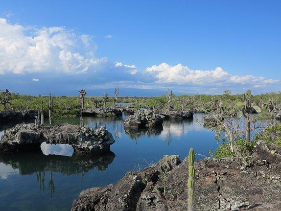 Puerto Villamil, Ecuador: photo2.jpg