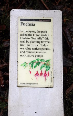 Nahuku - Thurston Lava Tube: Markers .,. of Native plants on the walk down to the Tube