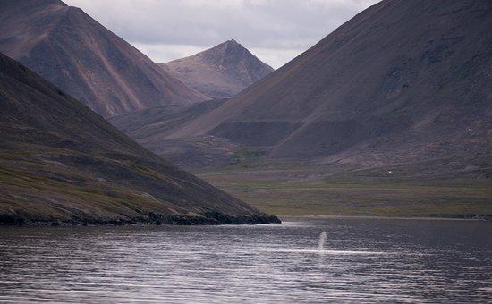 Чукотский автономный округ, Россия: Kolyuchin Inlet, with whale spouting