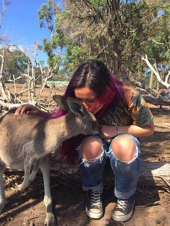Cowes, Αυστραλία: Kangaroo kiss