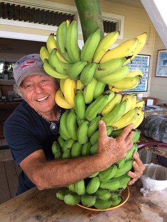 Holualoa, HI: newly picked bananas