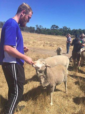 Lancefield, Austrália: feeding time