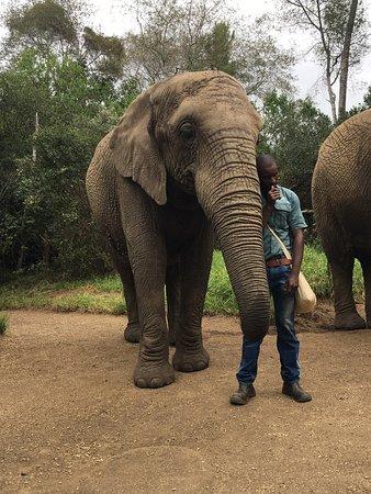 Elephant Sanctuary: photo2.jpg