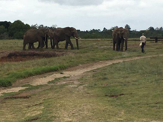Elephant Sanctuary: photo3.jpg