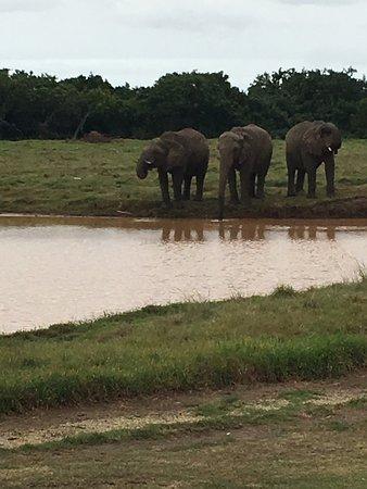 Elephant Sanctuary: photo4.jpg