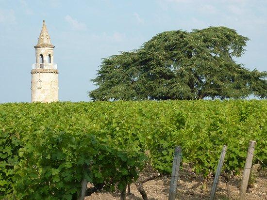 Begadan, ฝรั่งเศส: la tour et les vignes