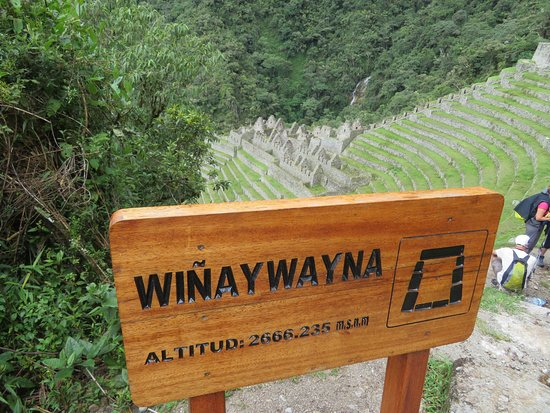 Alpaca Expeditions: Winay Wayna.