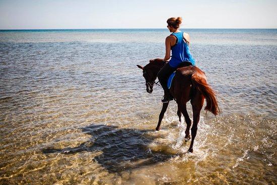 Sharm Horses