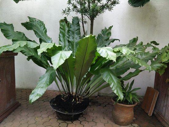 写真Precious Garden Samal枚