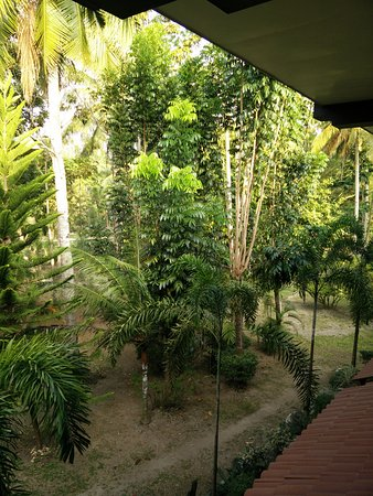 Precious Garden Samal: Trees in Garden