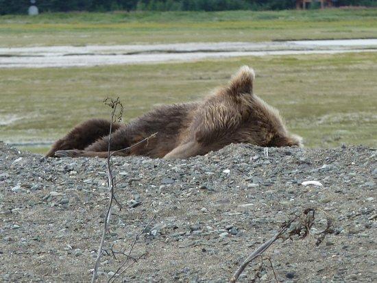 Alaska Bear Adventures: è tempo di schiacciare un pisolino