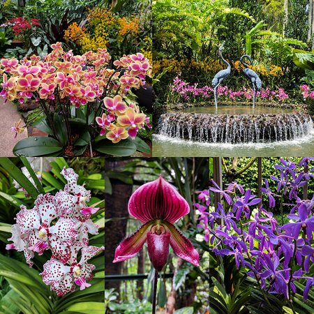 Various Orchids On Display At The Singapore National Orchid Garden