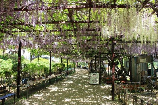 Janohana Yurakuen Garden