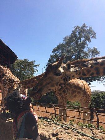 African Fund for Endangered Wildlife (Kenya) Ltd. - Giraffe Centre: photo4.jpg