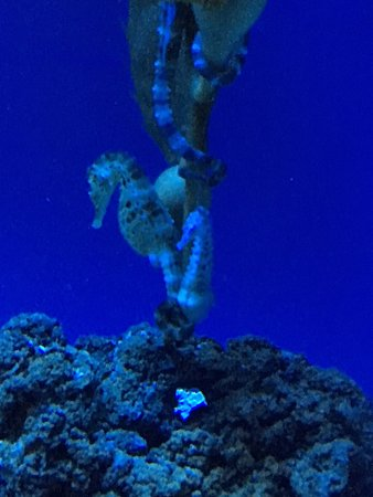 photo1 - foto di acquario di genova, genova - tripadvisor