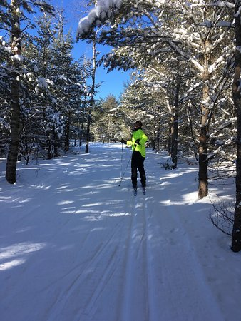 Hartwick Pines State Park: Excellent cross country ski trails