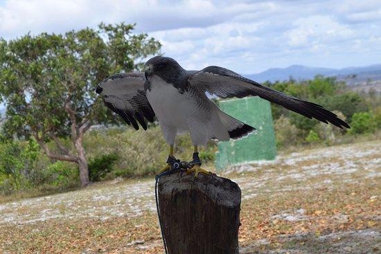 Itabaiana, SE: Algumas aves são exercitadas diariamente