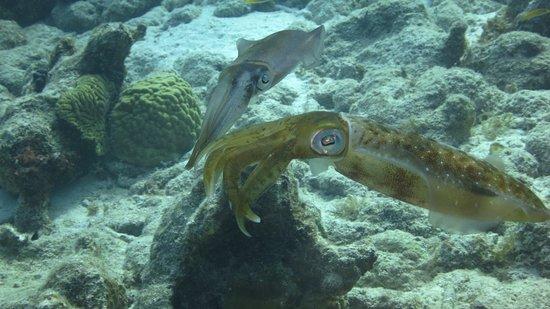 Dive Friends Bonaire: photo0.jpg