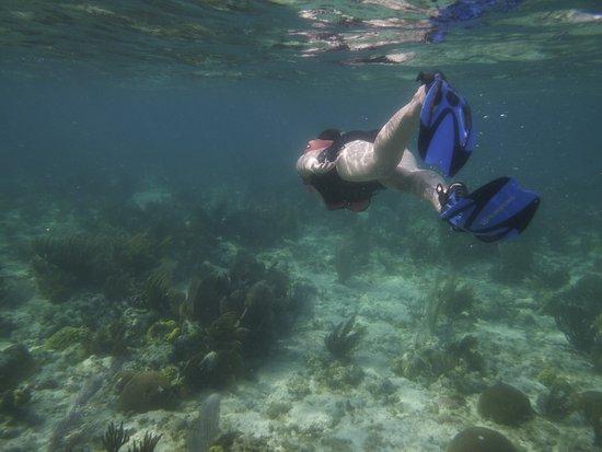 Snorkel Key Largo