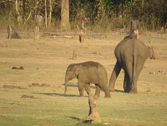 Orange County Resorts Kabini: photo8.jpg