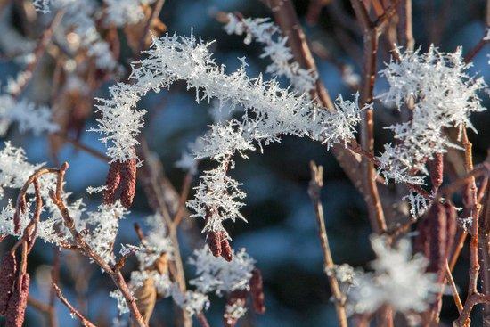 Gander, Kanada: hoar frost in the park