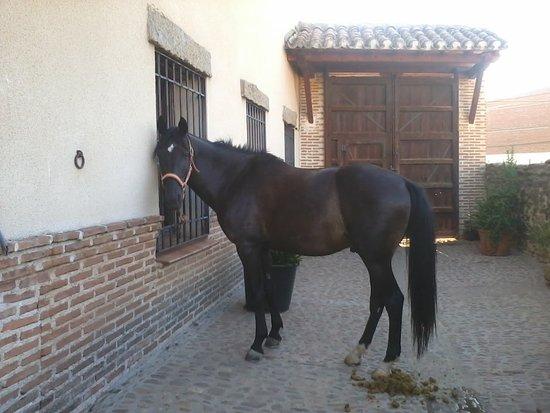 Aldeanueva de Barbarroya, Espagne : Patio casa