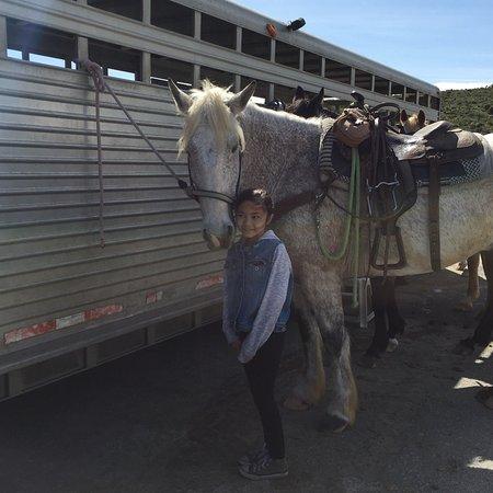 Monterey Bay Equestrian Center: photo0.jpg