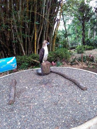 Davao City, Filipina: Philippine Eagle