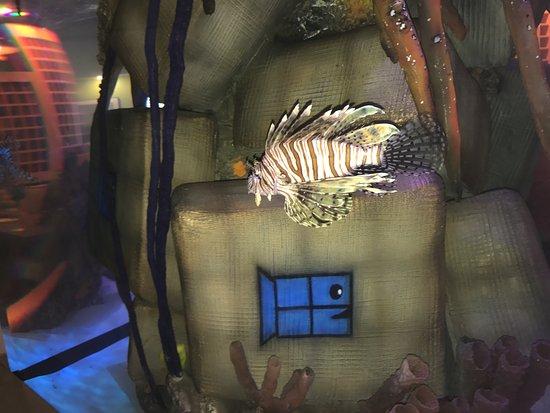 Cudjoe Key, FL: Salt water aquarium in the dining area