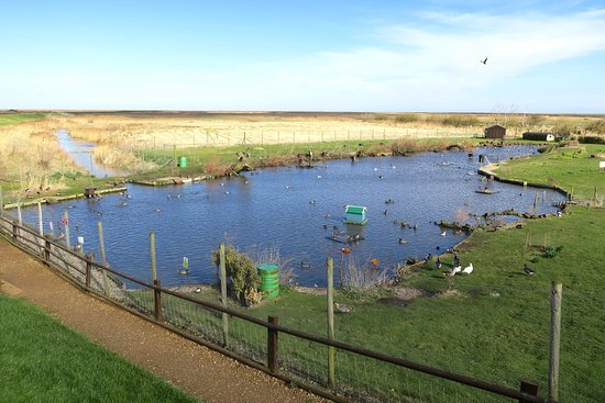 Blakeney Conservation Duck Pond
