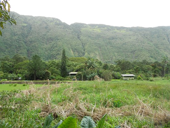 Waipi'o On Horseback: Sample view, although it does not do the place justice.