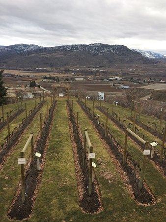 Oliver, แคนาดา: Tinhorn Creek Vineyards