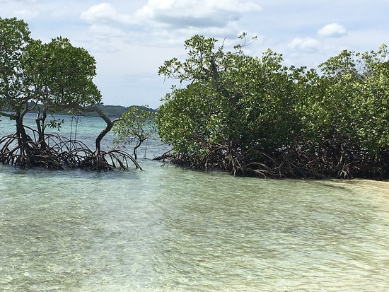 Busuanga Island, Filippijnen: mangrove trees by the beach