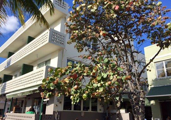 The Hotel of South Beach: Vue depuis Ocean Drive, piscine et salon ombragé.