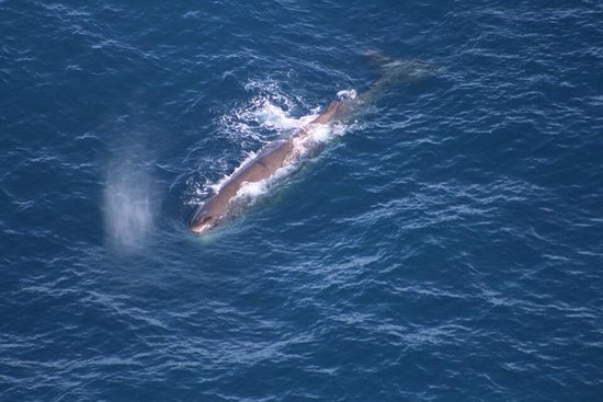 Wings Over Whales: photo2.jpg