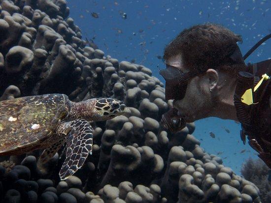 Mafia Island, Tanzania: Hawksbill Turtle and Diver