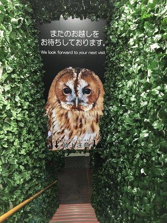 Kurashiki Owl's Forest Zoo