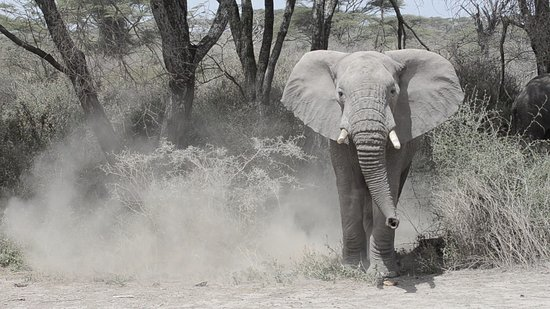Warrior Trails Day Tour: The elephant that feigned a charge at us