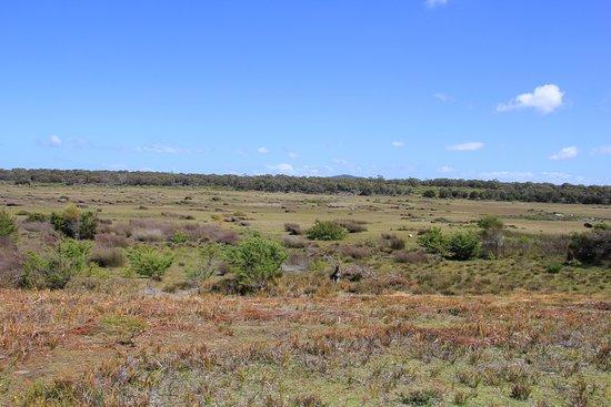 Scottsdale, Avustralya: Forester Kangaroo Drive