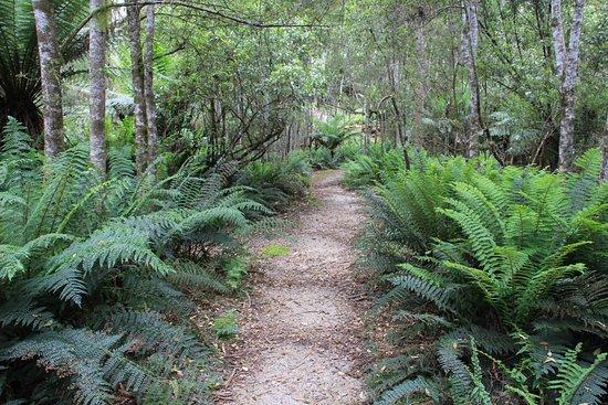 Evercreech Forest Reserve