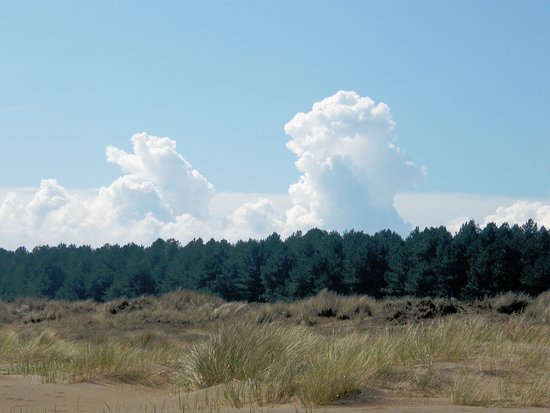 Tayport, UK: View of the forest area from the beach