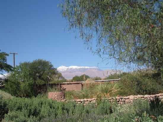 Altiplanico Atacama Photo