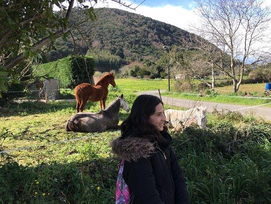 아르누에로 사진