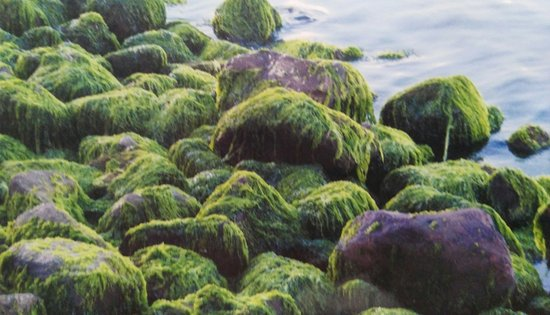 Rizal Boulevard: moss covered stones