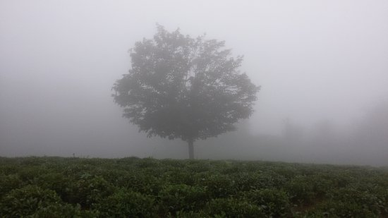 Lahijan, Iran: sheytan kooh(devil mountain) - tea farm