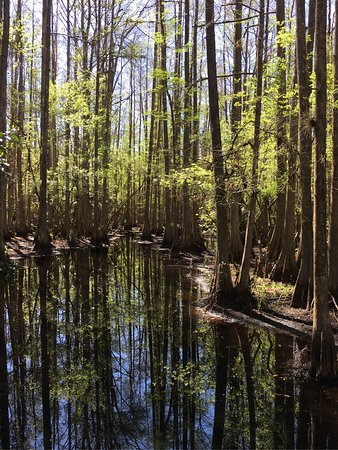 Highlands Hammock State Park: photo1.jpg