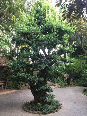 Provincia de Quang Nam, Vietnam: photo2.jpg