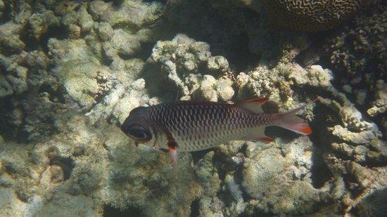 Moyenne Island: fish