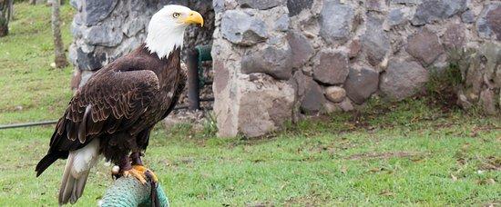 Parque Cóndor: Increíble ave.