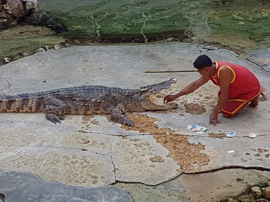 Ładnie to wygląda - Picture of Samutprakan Crocodile Farm and Zoo, Bangkok - ...